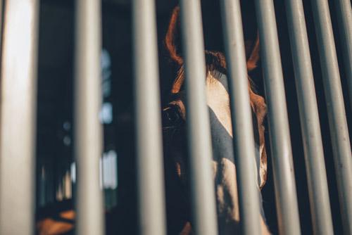 prisión provisional | Traducción jurídica y jurada de inglés a español